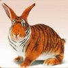 rabbit tiger