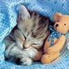 kitten with toy bear