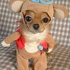 Puppy in funny suit