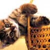 Kitten in the basket