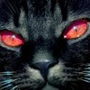 Red eyes cat